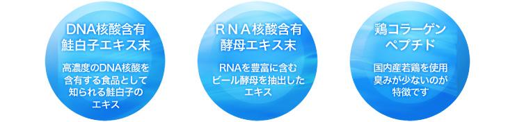 RNA核酸含有